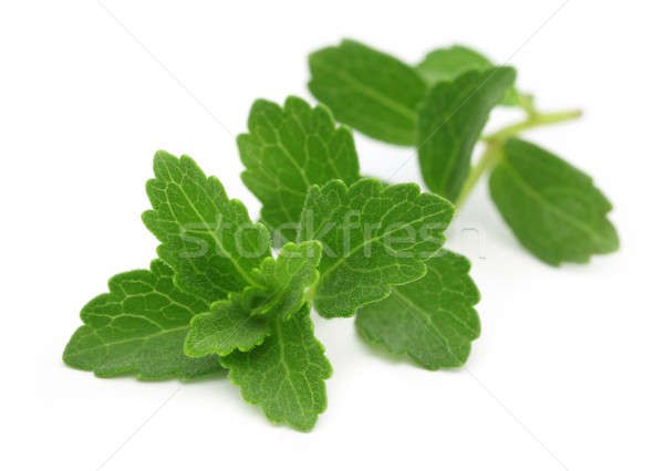 Stevia Stock photo © bdspn