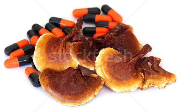 Stock photo: Ganoderma mushroom with capsule