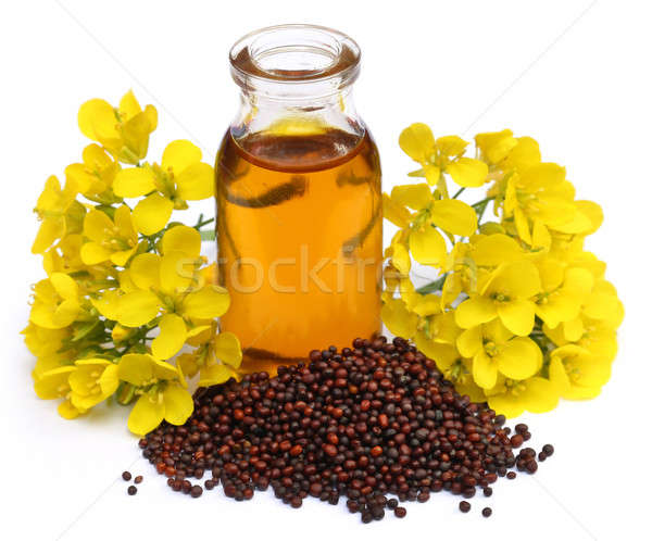 Mustard oil with flower Stock photo © bdspn