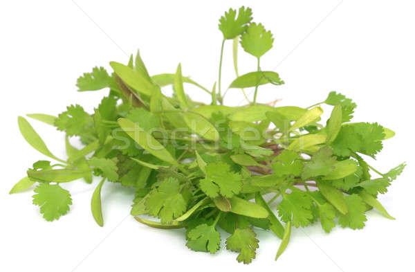 Taze kişniş yaprakları beyaz gıda Stok fotoğraf © bdspn