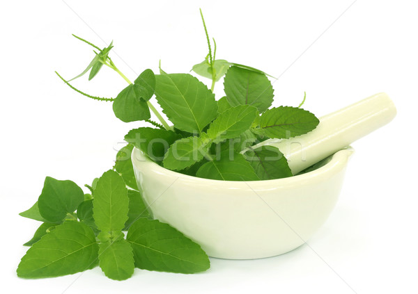 Medicinal herbs with mortar and pestle Stock photo © bdspn