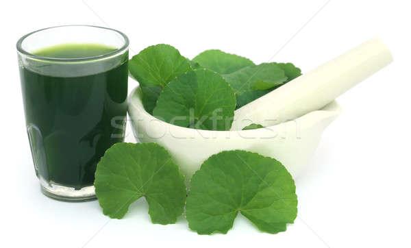 Laisse sous-continent indien feuille verre vert Photo stock © bdspn
