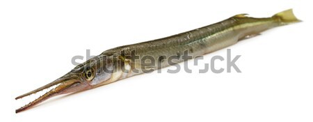 Ago pesce sud-est asiatico bianco alimentare mare Foto d'archivio © bdspn