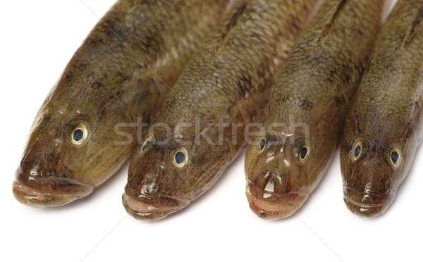 Tanque popular peixe subcontinente indiano comida grupo Foto stock © bdspn