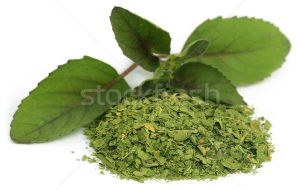 Gyógyászati bazsalikom levelek fehér természet levél Stock fotó © bdspn