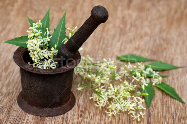 Neem leaves and flower on an old mortar Stock photo © bdspn