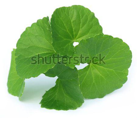 Folhas subcontinente indiano branco comida folha Foto stock © bdspn