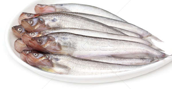 Fresh water Pabda fish of Southeast Asia Stock photo © bdspn