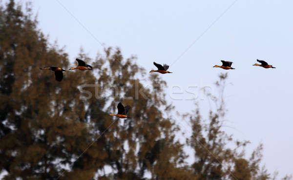 Stock fotó: Repülés · madarak · Banglades · víz · szem · kék