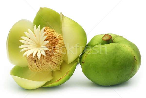 Flower of Elephant apple Stock photo © bdspn