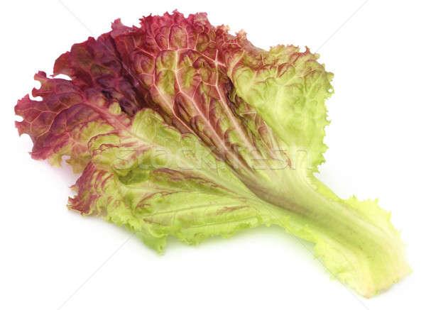 Red lettuce over white background Stock photo © bdspn