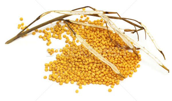 Taze altın hardal kurutulmuş fasulye beyaz Stok fotoğraf © bdspn