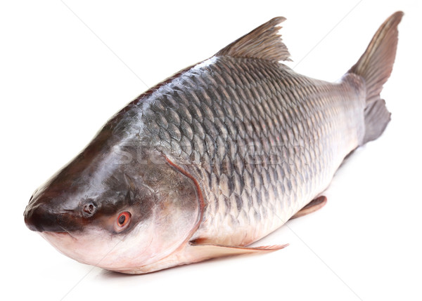 Rohu or Rohit fish of Indian subcontinent Stock photo © bdspn