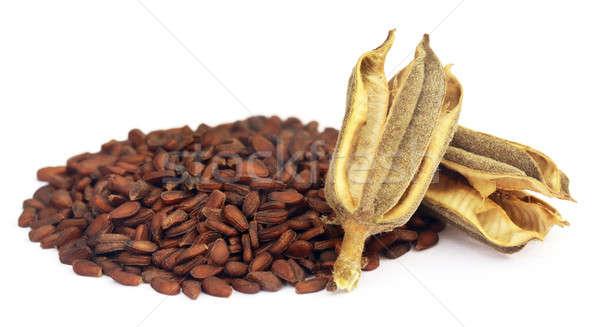 Branco textura comida semente grão Foto stock © bdspn