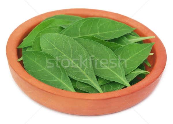 Henna leaves Stock photo © bdspn