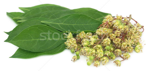 Ayurvedic henna flower with leaves Stock photo © bdspn