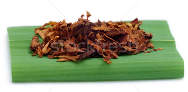 Tabaco cigarrillo hoja verde médico médicos Foto stock © bdspn
