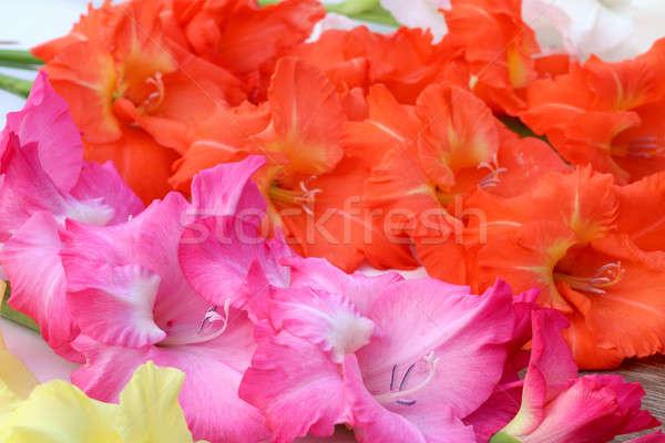 Foto stock: Flor · rosa · laranja · amarelo · foco