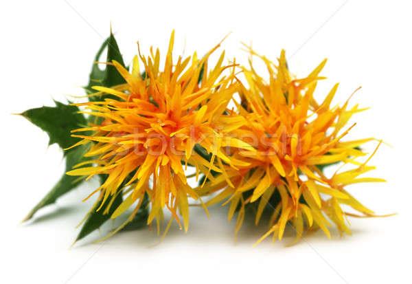 Amarelo flor comida fundo branco cozinhar Foto stock © bdspn