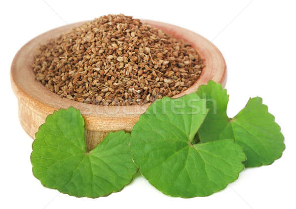 Ajwain seeds with thankuni leaves Stock photo © bdspn