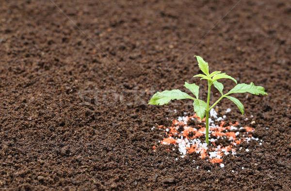 Ayurvedic Nishinda plant with chemical fertilizer Stock photo © bdspn