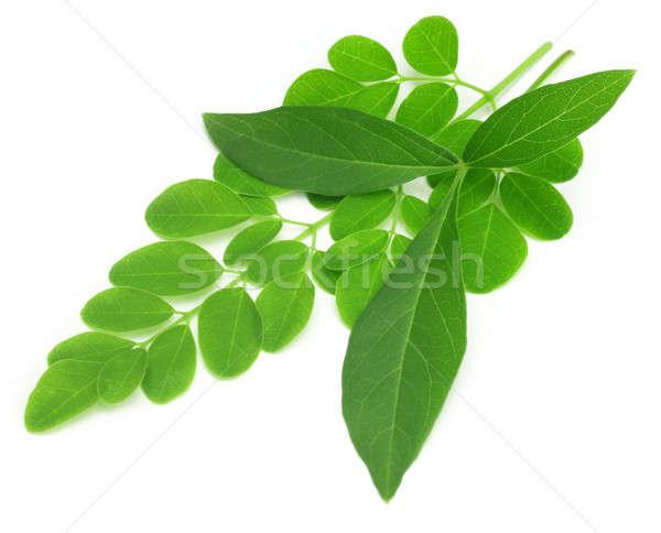 Medicinal vitex negundo with moringa leaves Stock photo © bdspn