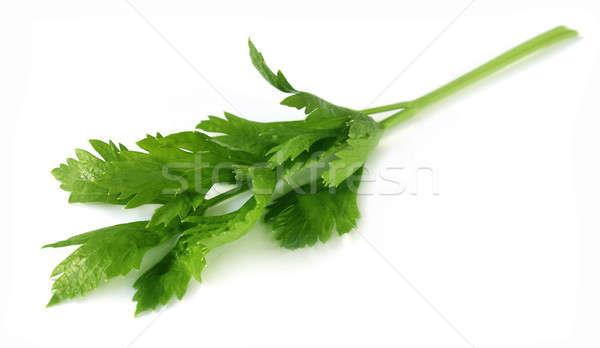 Celery leaves Stock photo © bdspn
