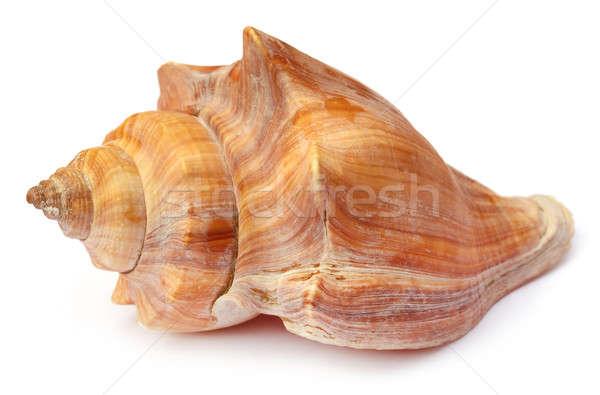 Snail shell Stock photo © bdspn