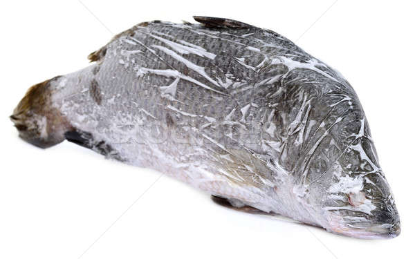 Frozen Barramundi or Koral fish of Southeast Asia Stock photo © bdspn