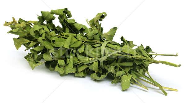Dried moringa leaves Stock photo © bdspn