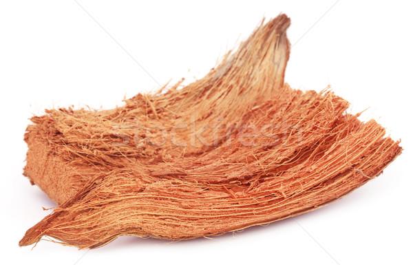 белый текстуры завода оболочки кокосового Сток-фото © bdspn