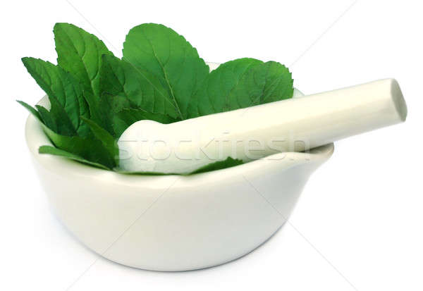 Medicinal tulsi with mortar and pestle Stock photo © bdspn