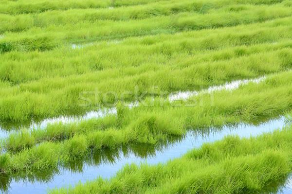 Green grass Stock photo © bdspn