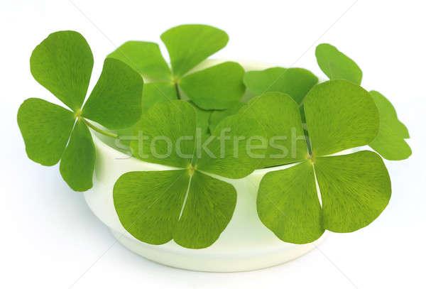 Decorative clover leaves  Stock photo © bdspn