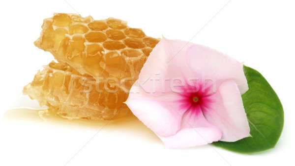 Mel pente flor comida grupo Foto stock © bdspn