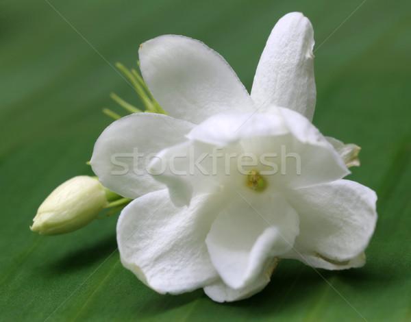 Jasmine flower on green leaf Stock photo © bdspn