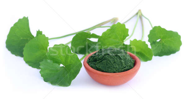 Medicinal thankuni leaves Stock photo © bdspn