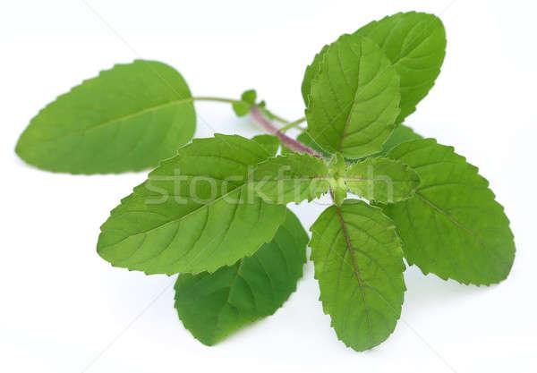 Gyógyászati piros levelek fehér természet levél Stock fotó © bdspn