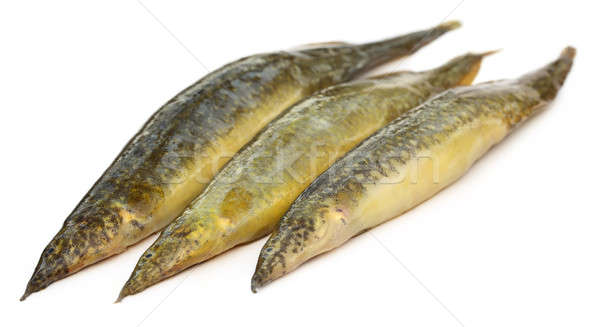 Indian eel over white background Stock photo © bdspn