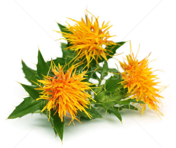 Close up of safflowers Stock photo © bdspn