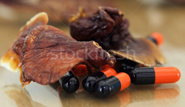 Ganoderma mushroom with capsule Stock photo © bdspn