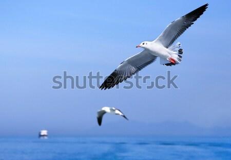 飛行 カモメ 青 海 自然 背景 ストックフォト © bdspn