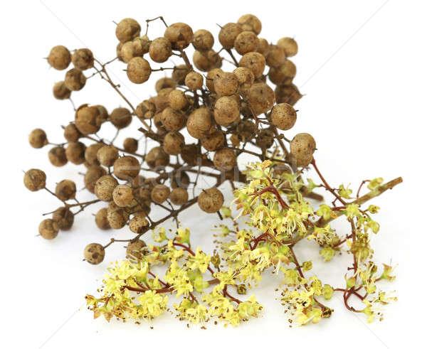 Henna virág magok fehér természet bőr Stock fotó © bdspn
