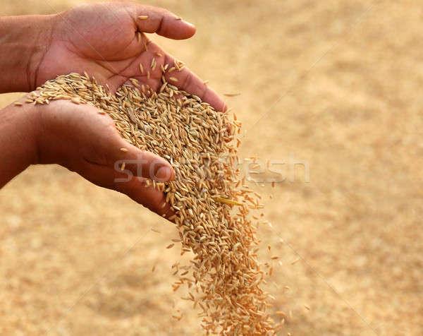 Mão dourado sementes subcontinente indiano comida Foto stock © bdspn