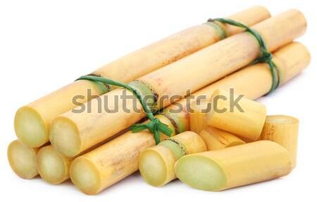 Piece of sugarcane with sugar Stock photo © bdspn