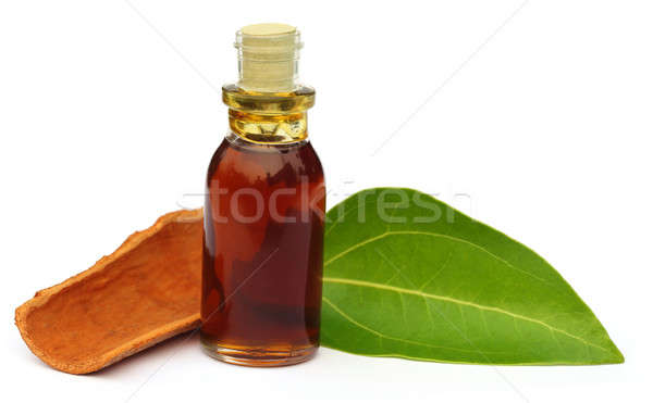 Cinnamon leaf with bark and essential oil  Stock photo © bdspn