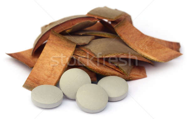 Medicinal Terminalia arjuna Stock photo © bdspn