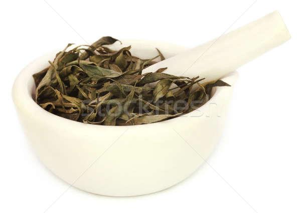 Ayurvedic medicinal Chirata  Stock photo © bdspn