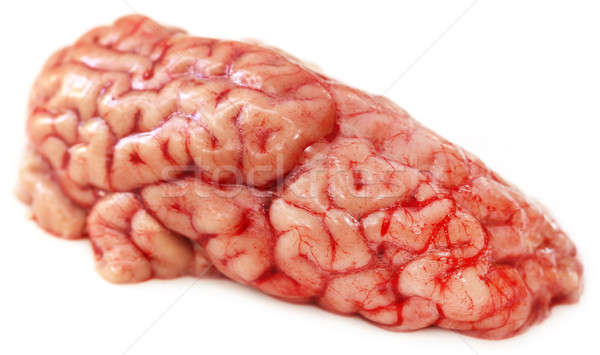Brain of a cow Stock photo © bdspn