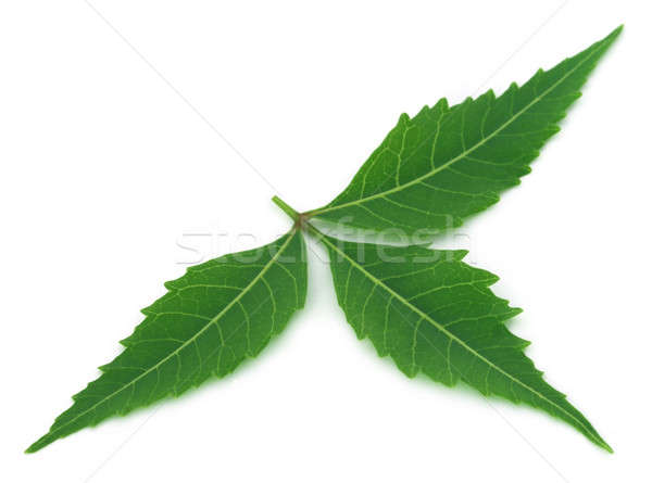 Medicinal neem leaf Stock photo © bdspn